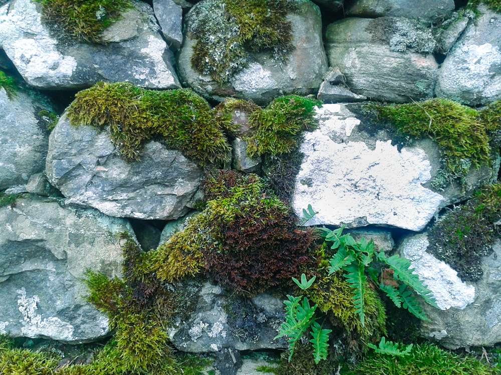 Skye-McDonald-Scotland-3-Dry-Stone-Wall-adj