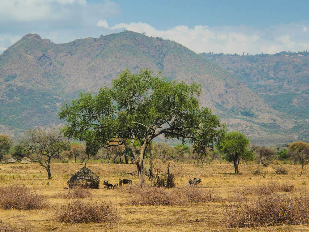 Countryside view of mountains, cattle and hut on road to Jinka