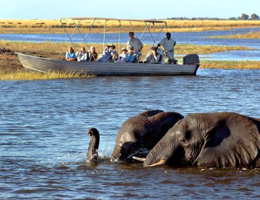 Elephants in Chobe River with safari boat onlookers