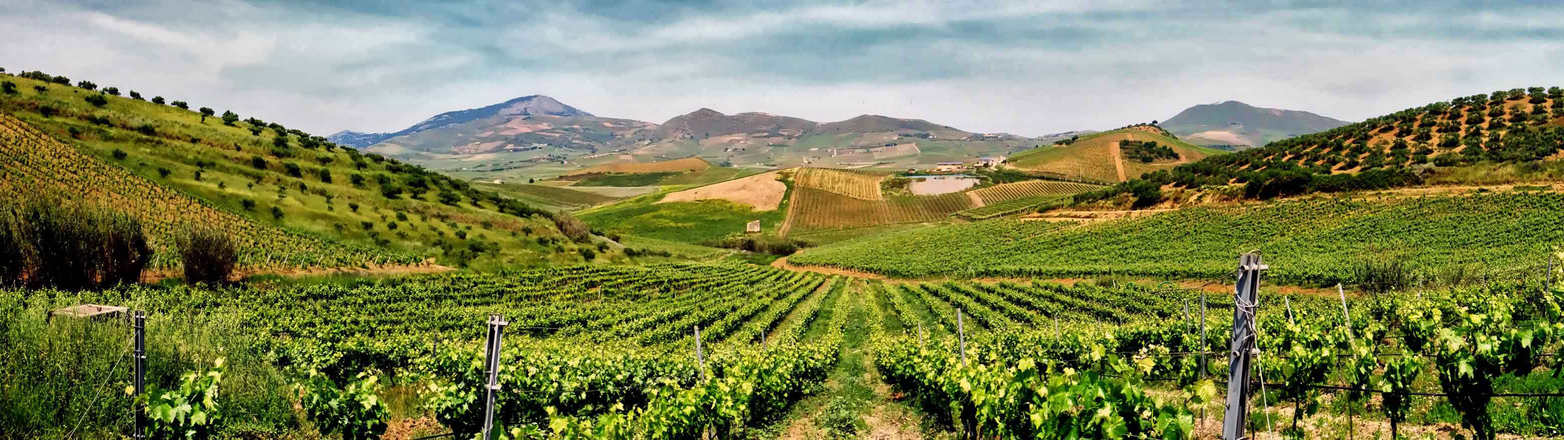 Larry-Arsenault-Pano-Vineyards-Sicily-sm-web